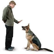 강아지~1.JPG